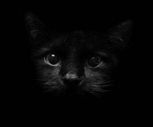 black, lovers, and cat image