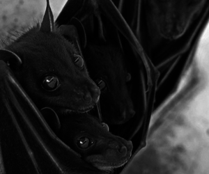 baby, bats, and black and white image