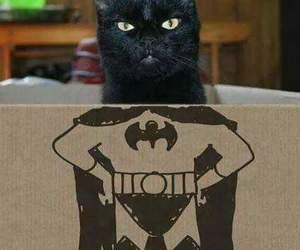 cat, batman, and black image