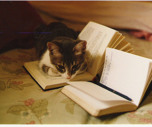 animal, book, and cute image