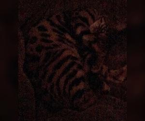 beautiful, bengal, and cat image