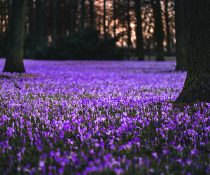 flowers and forest image
