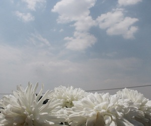 cielo, flores, and flowers image