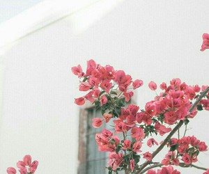 flower, vintage, and vintage photo image