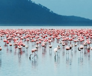 blue, pink, and flamingos image