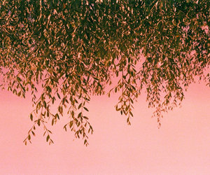 plants, pink, and photography image