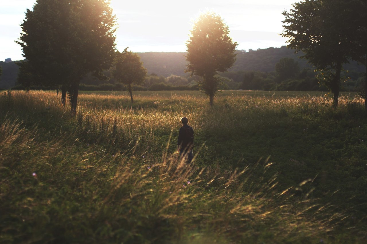 light, meadow, and nature image