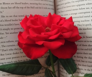 books, red rose, and wallpaper image