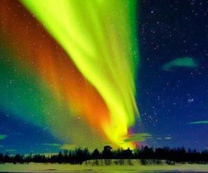 lights, nature, and night image