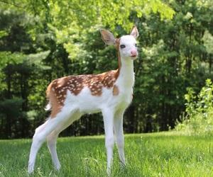 deer and cute image