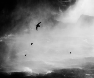 bird, black and white, and wind image