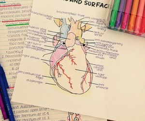 study, medicine, and notes image