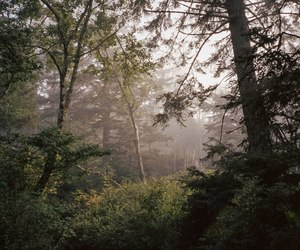 forest, glow, and nature image