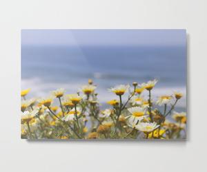 daisies, society6, and ocean image