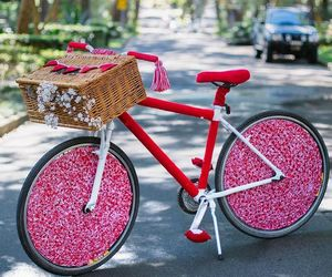 basket, bicycle, and blossoms image