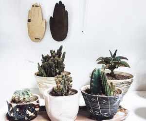 plants, nature, and cactus image