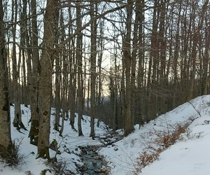 camping, nature, and snow image