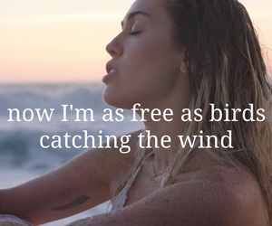 birds, free, and malibu image