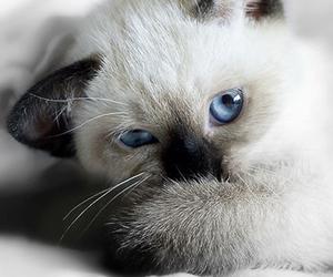 cat, animals, and puppy image