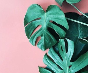 pink, green, and plants image