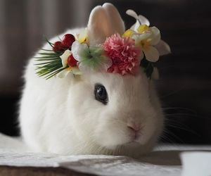 bunny, cute, and animal image