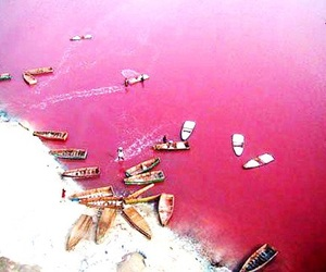 pink and pink lake image