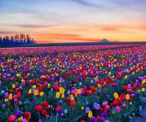 colours and flower image