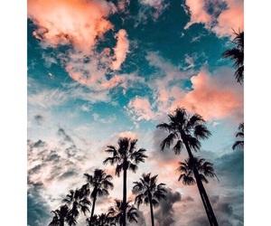 beautiful, fml, and palmtrees image