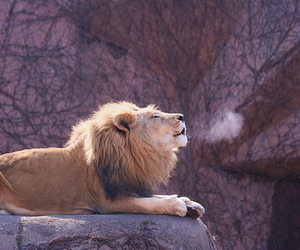 lion and photography image