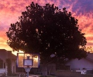 sky and tree image