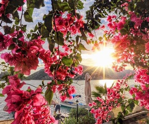 flowers, summer, and sun image