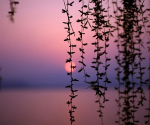 sunset, nature, and pink image