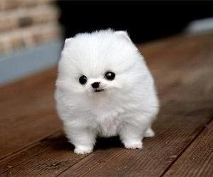 baby, white, and cute image