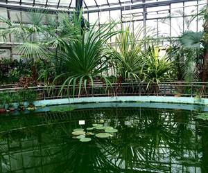 green, greenhouse, and nature image