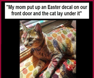 cats, funny, and funny pics image