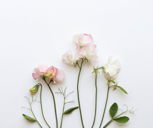 flowers, simple, and pink image