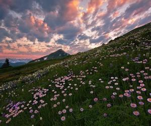 beautiful, beauty, and field image