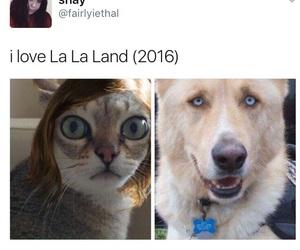 funny and la la land image