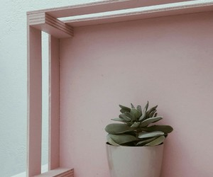 pink and plant image