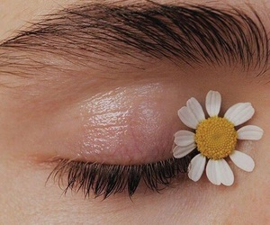daisy, flower, and eyes image