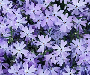 flowers, purple, and color image