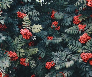 red, green, and nature image