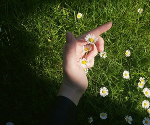 flower, freedom, and grass image