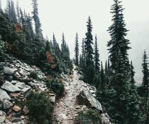 explore, nature, and forest image