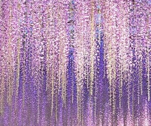 flower and wisteria image