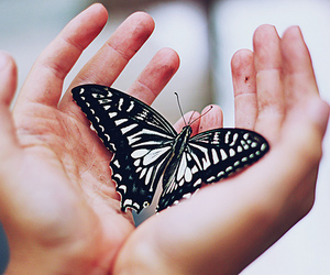 butterfly, photography, and hands image