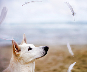 dog, feather, and photography image