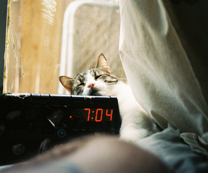 cat, vintage, and morning image