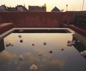 flowers, marrakech, and sunset image