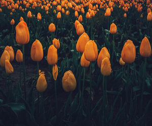 sky, spring, and tulips image